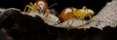 シロアリの発生する周囲の環境