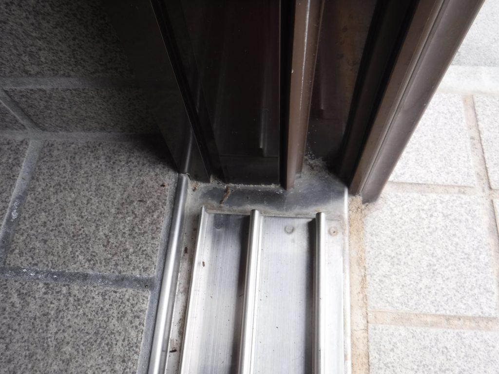 玄関の羽アリ死骸写真