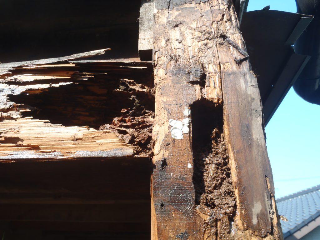 北九州リフォーム時に見つかったシロアリ被害