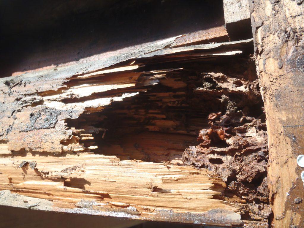 北九州リフォーム時に見つかったシロアリ被害02