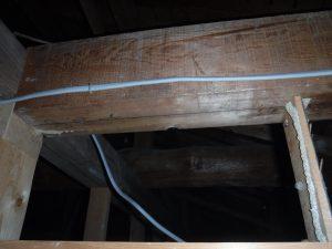天井裏蟻道写真