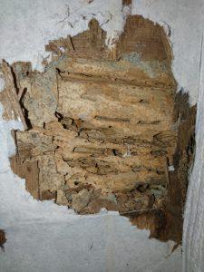 シロアリ被害は床下だけではございません。