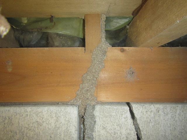 根太にシロアリの蟻道