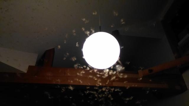 白アリの正しい生態を知って、ご近所トラブルを防ぎましょう