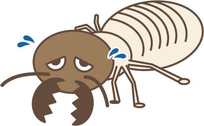 福岡にも多く分布するシロアリの駆除対策
