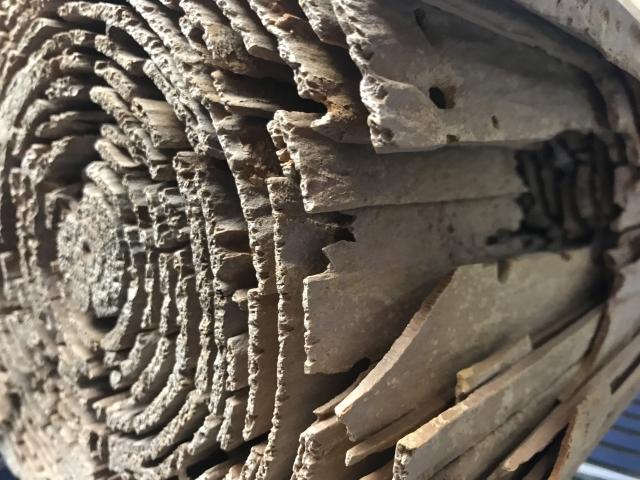 住宅建材を食い荒らすシロアリが住み着く原因と環境上の問題