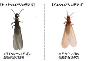 温暖な福岡でのシロアリ対策における注意点とは